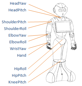 https://developers.softbankrobotics.com/sites/default/files/repository/56_html_nao/_images/juliet_joints.png